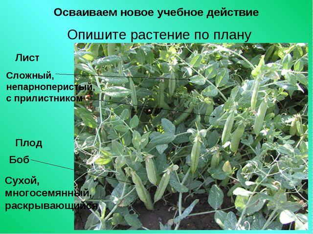 Осваиваем новое учебное действие Опишите растение по плану Лист Сложный, непа...
