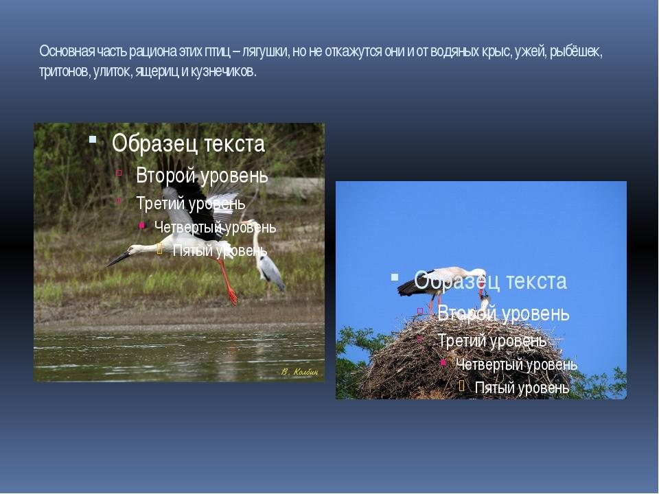 Основная часть рациона этих птиц – лягушки, но не откажутся они и от водяных...