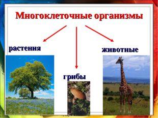Многоклеточные организмы животные растения грибы