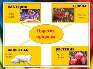 Царства природы бактерии животные растения грибы 2500 видов 350 тыс. видов 2