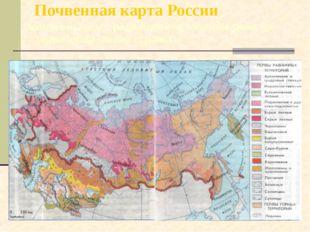 Почвенная карта России Познакомьтесь с размещением главных почв на территории