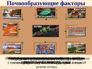 Почвообразующие факторы Вспомните какую роль играет в образовании почв каждый