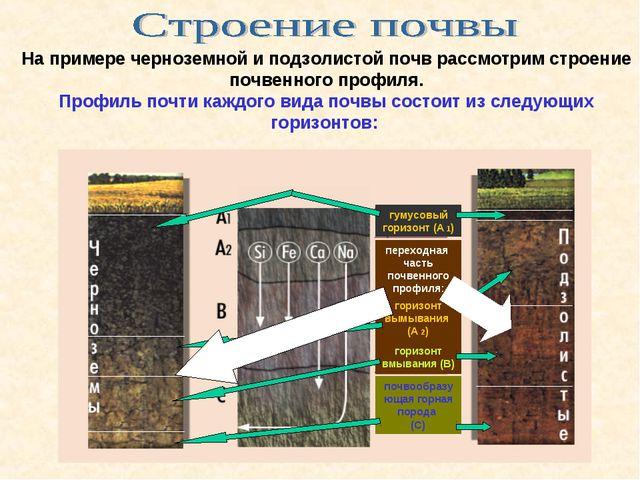 На примере черноземной и подзолистой почв рассмотрим строение почвенного проф...
