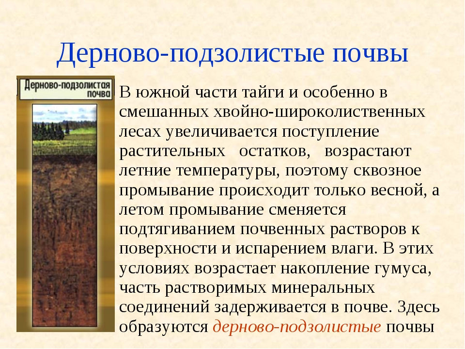 Где находится дерново-подзолистые почвы