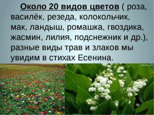 Около 20 видов цветов ( роза, василёк, резеда, колокольчик, мак, ландыш, ром