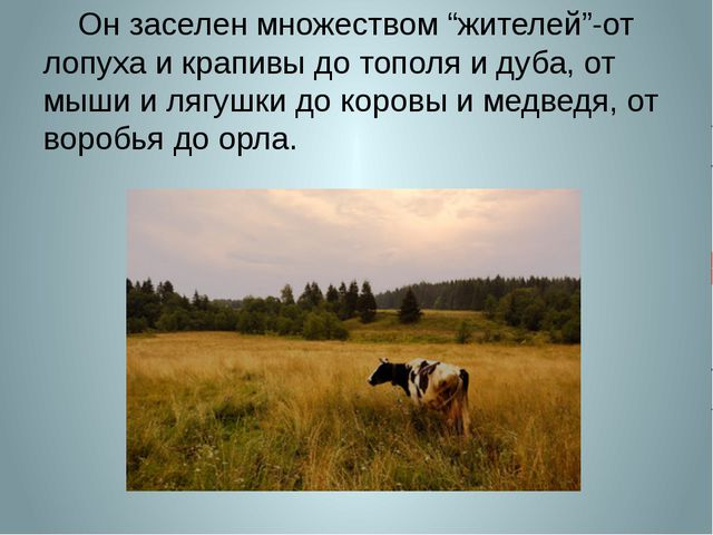 """Он заселен множеством """"жителей""""-от лопуха и крапивы до тополя и дуба, от мыш..."""