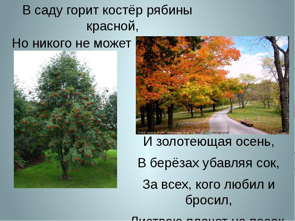 И золотеющая осень, В берёзах убавляя сок, За всех, кого любил и бросил, Лист...