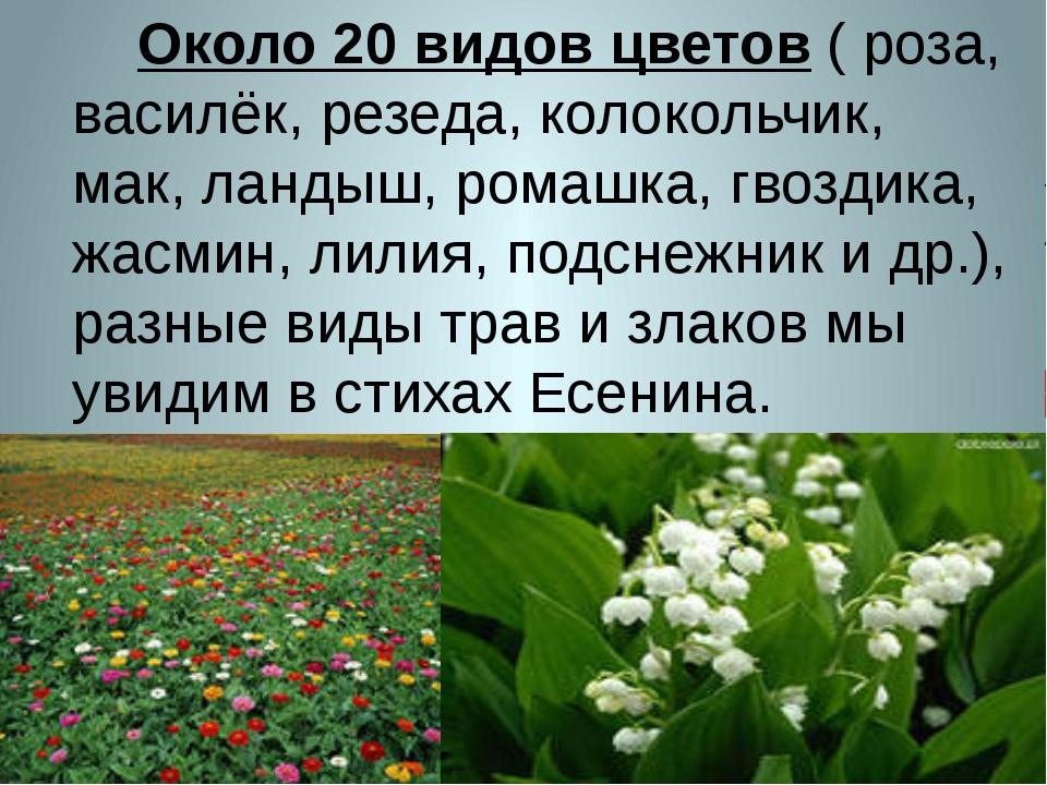 Около 20 видов цветов ( роза, василёк, резеда, колокольчик, мак, ландыш, ром...