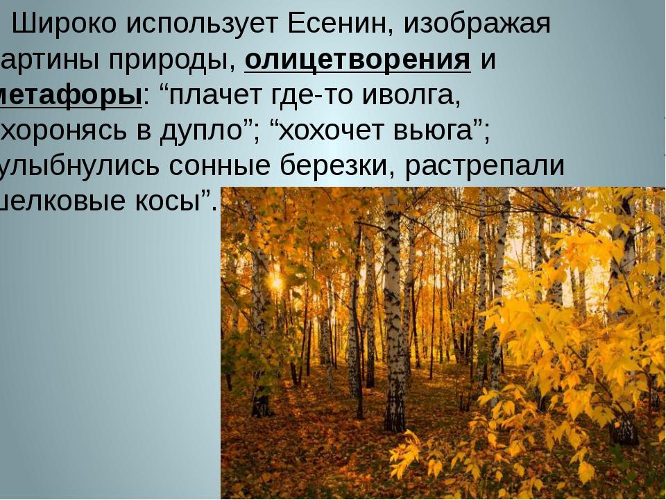 Широко использует Есенин, изображая картины природы, олицетворения и метафор...