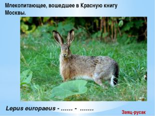 Lepus europaeus - …… - ……. Млекопитающее, вошедшее в Красную книгу Москвы. З