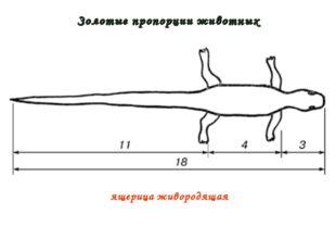 Золотые пропорции животных ящерица живородящая