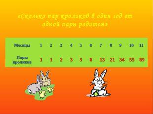 «Сколько пар кроликов в один год от одной пары родится»