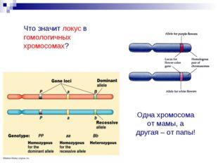 Что значит локус в гомологичных хромосомах? Одна хромосома от мамы, а другая