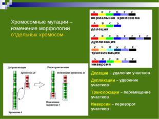 Хромосомные мутации – изменение морфологии отдельных хромосом Делеции – удале