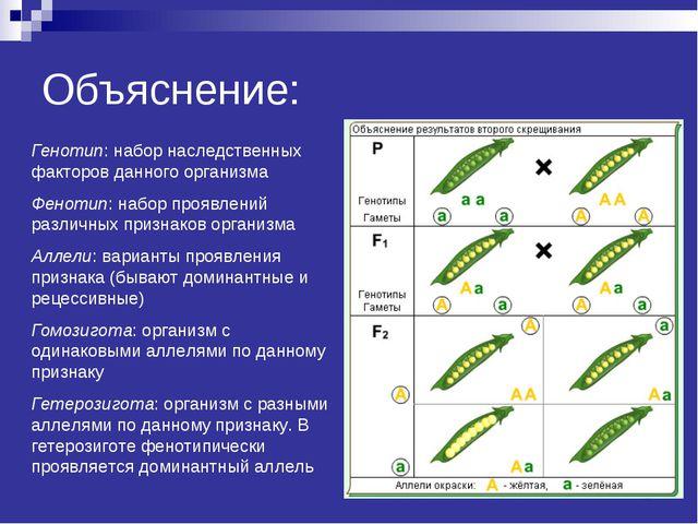 Объяснение: Генотип: набор наследственных факторов данного организма Фенотип:...