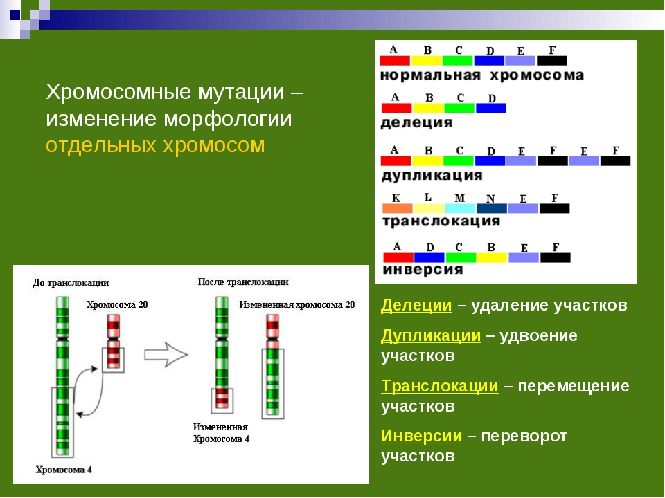 Хромосомные мутации – изменение морфологии отдельных хромосом Делеции – удале...