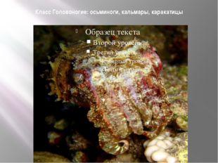 Класс Головоногие: осьминоги, кальмары, каракатицы