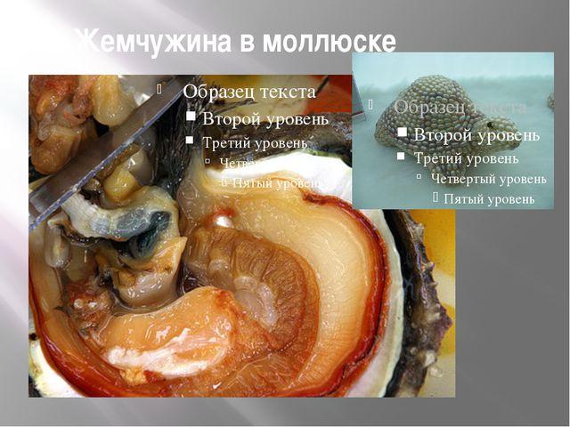 Жемчужина в моллюске