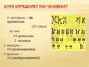 У человека – 46 хромосом (23 пары) из них: 44 аутосомы 2 половые У женщин –