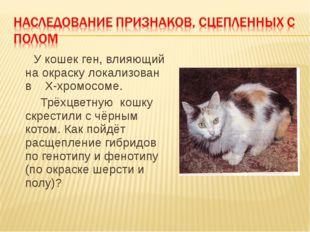 У кошек ген, влияющий на окраску локализован в Х-хромосоме. Трёхцветную кошк