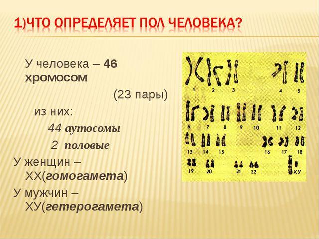 У человека – 46 хромосом (23 пары) из них: 44 аутосомы 2 половые У женщин –...