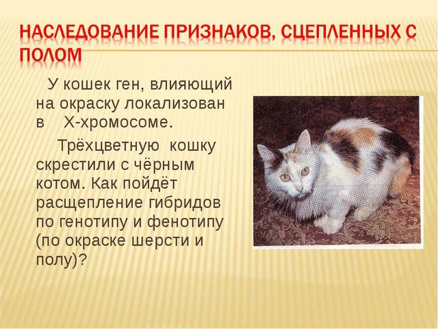 У кошек ген, влияющий на окраску локализован в Х-хромосоме. Трёхцветную кошк...