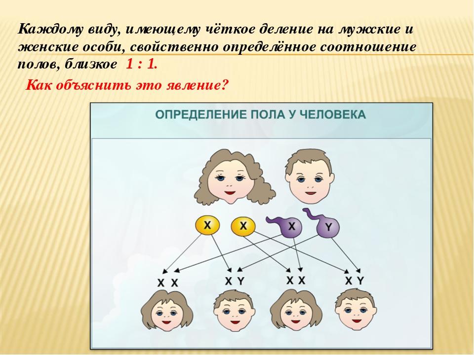 Каждому виду, имеющему чёткое деление на мужские и женские особи, свойственно...