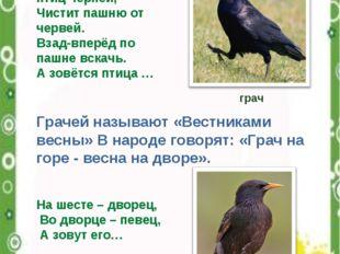 Всех перелётных птиц черней, Чистит пашню от червей. Взад-вперёд по пашне вск