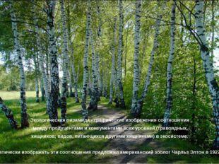 Экологическая пирамида - графические изображения соотношения между продуцента