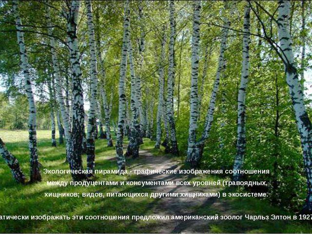 Экологическая пирамида - графические изображения соотношения между продуцента...