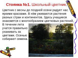 Стоянка №1. Школьный цветник. Цветник с весны до поздней осени радует нас ярк