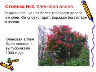 Стоянка №2. Кленовая аллея. Поздней осенью нет более красивого дерева, чем кл