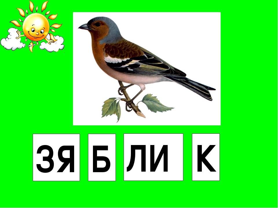 ЗЯ Б ЛИ К