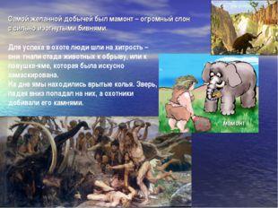 мамонт Для успеха в охоте люди шли на хитрость – они гнали стада животных к о