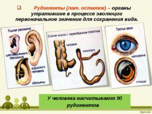 Рудименты (лат. остаток) – органы утратившие в процессе эволюции первоначаль