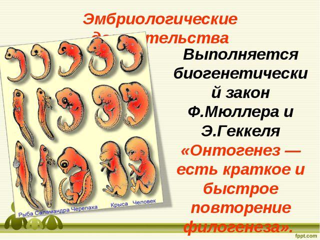 Выполняется биогенетический закон Ф.Мюллера и Э.Геккеля «Онтогенез — есть кра...