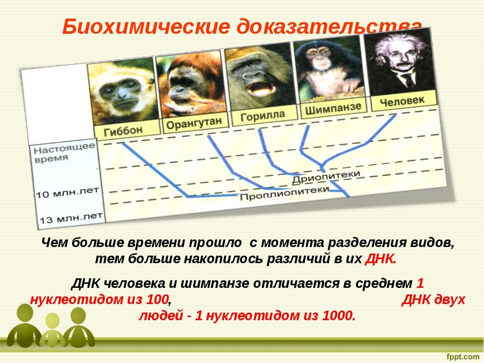 Чем больше времени прошло с момента разделения видов, тем больше накопилось р...