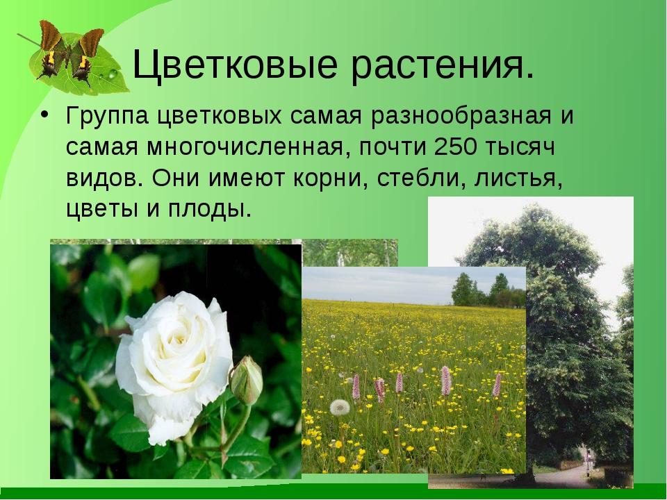 Цветковые растения картинки с названиями и описанием