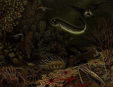 Фауна абиссали – Глубоководная фауна
