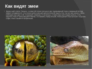 Как видят змеи Зрение змей слабое. Причина – в кожистой плёнке сросшихся век,