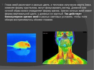 Глаза змей различают и разные цвета, и тепловое излучение жертв.Змеи, изменяя