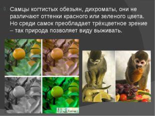 Самцы когтистых обезьян, дихроматы, они не различают оттенки красного или зел