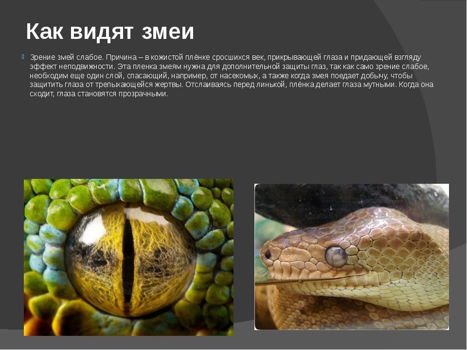 Как видят змеи Зрение змей слабое. Причина – в кожистой плёнке сросшихся век,...