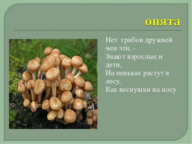 Нет грибов дружней чем эти, - Знают взрослые и дети, На пеньках растут в лесу...