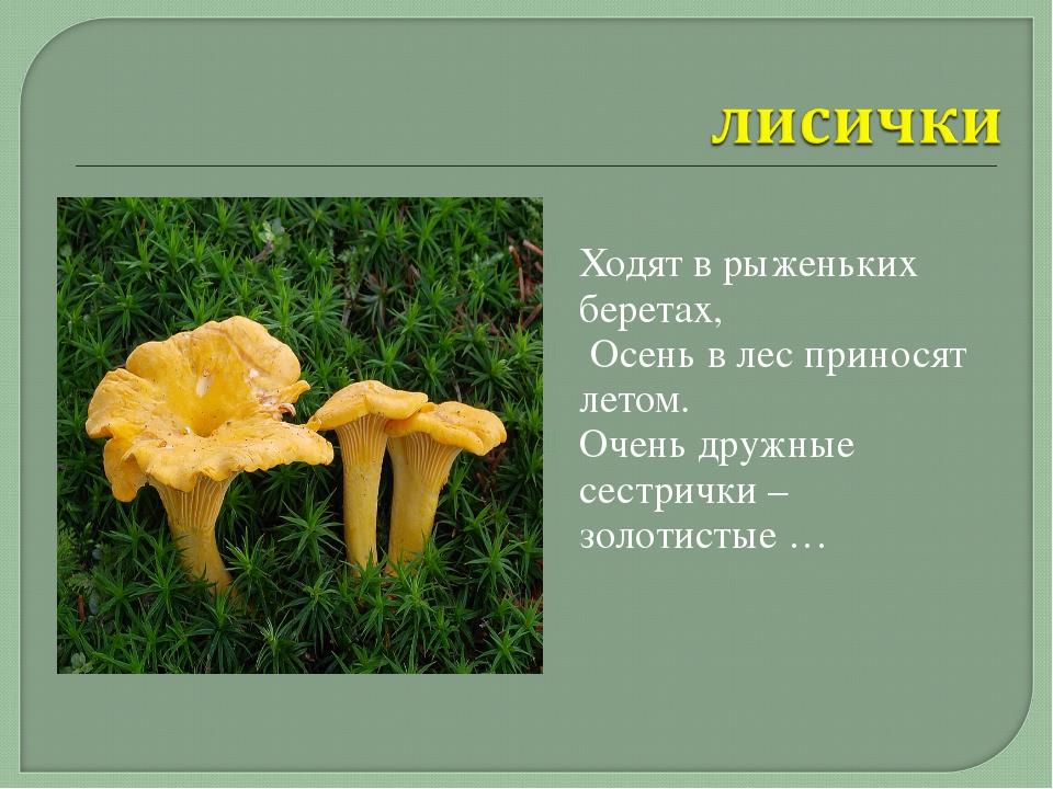 Ходят в рыженьких беретах, Осень в лес приносят летом. Очень дружные сестрич...