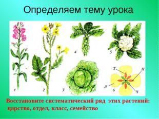 Определяем тему урока Восстановите систематический ряд этих растений: царство