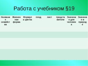 Работа с учебником §19 Название семействаЖизненная формаФормула цветкаплод