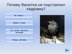 Он ведь знал, что кедровка — птица полезная: она разносит по тайге семена ке