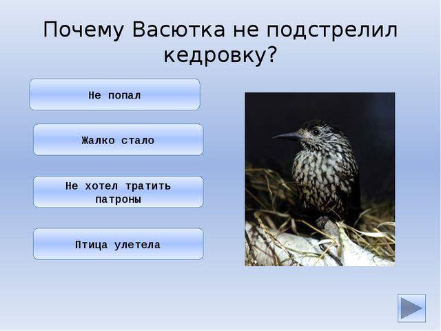 Он ведь знал, что кедровка — птица полезная: она разносит по тайге семена ке...