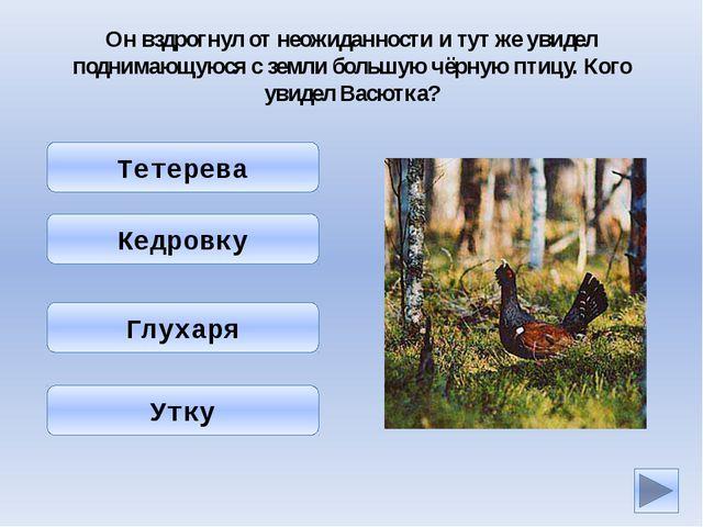 Что делать, если вы заблудились в лесу? Перво-наперво надо развести огонь. На...